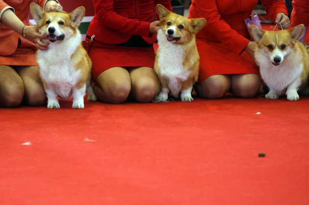 Dogs wait for the judges during a competition at the World Dog Show in Budapest