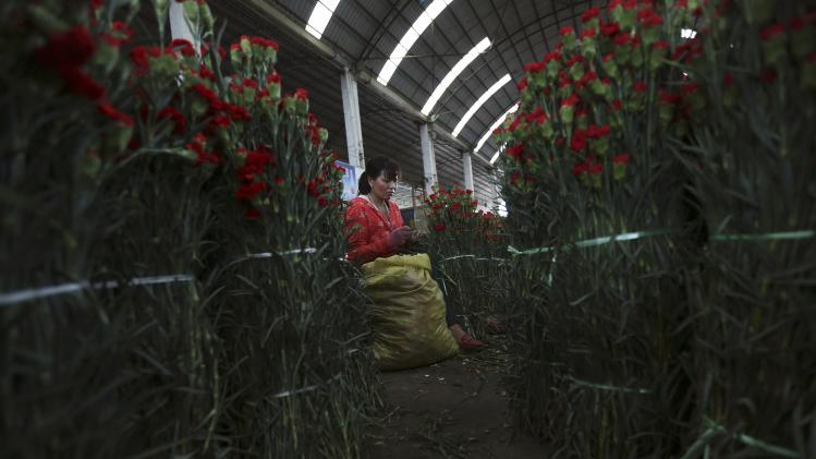 A vendor arranges carnations ahead of the upcoming Qixi Festival at a flower market in Kunming