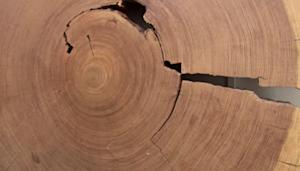 Does New Tree Ring Study Put the Chill on Global Warming?