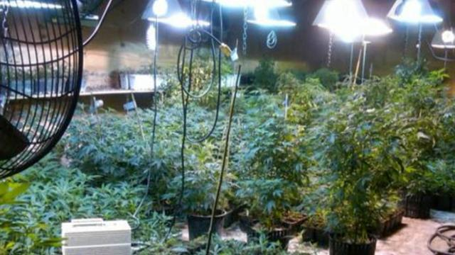 "Mom accused in ""Weeds""-like marijuana operation"
