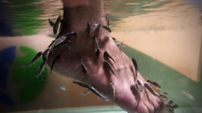 "An Iraqi man immerses his feet in a fish tank with Garra rufa, also known as Doctor fish at Baghdad's first fish pedicure salon in Iraq, Sunday, June 10, 2012. The latest luxury spa in Iraq's capital offers another small sign of life creeping closer to normalcy if your definition of ""normal"" includes having tiny fish nibble on your feet. (AP Photo/Khalid Mohammed)"
