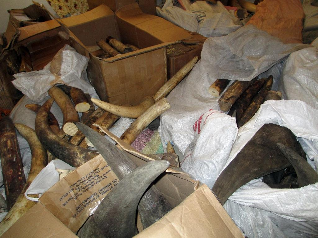 Officials held after rhino horns stolen from Mozambique police