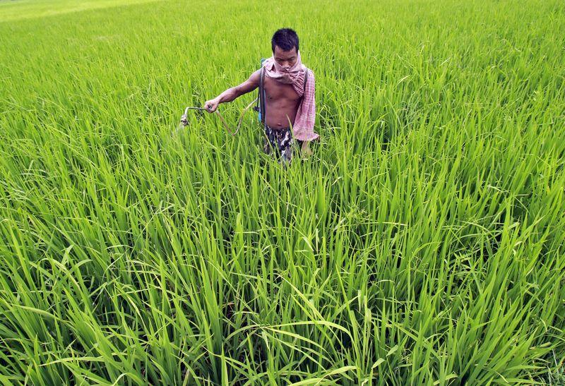India saves $1.8 bln on fertiliser subsidies, but no reform planned