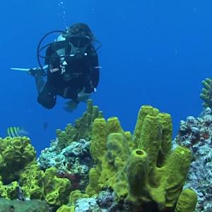 World's Best Diving & Resorts: Buddy Dive Bonaire Ned & Ana Deloach Reef Fish ID / Marine Life Education