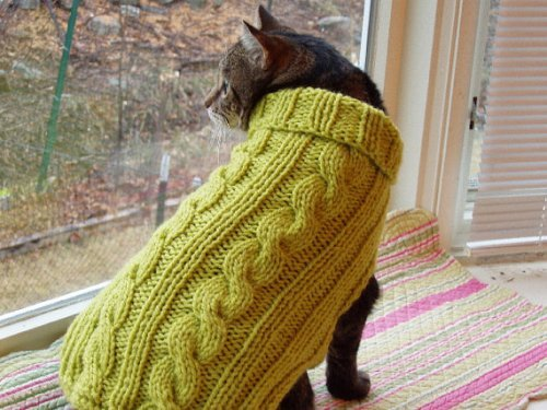 Cable-Knit Kitty