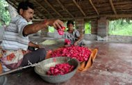 Flower farmers sort out petals at a farm in Kannauj, in the northern state of Kanpur. Located on the banks of River Ganges, Kannauj was once a key trading centre for Indian perfumes, spices and silks that were sent mainly to the countries in the Middle East