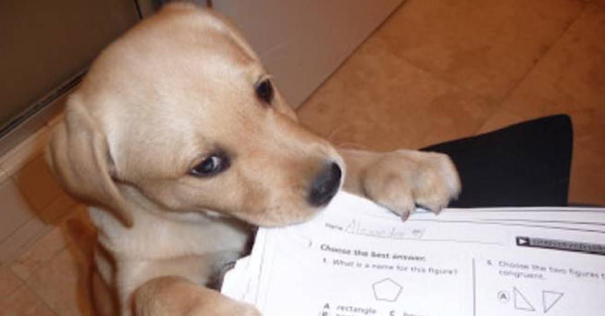 14 Amazing Reasons For Not Doing Your Homework