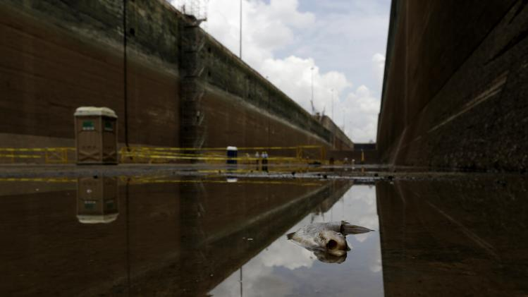 A dead fish is seen in a dry chamber of the Miraflores locks during its periodical maintenance at the Panama Canal in Panama City