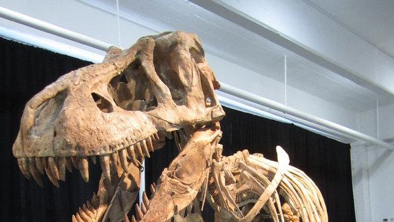 Auctioned Tyrannosaur Skeleton Possibly Smuggled