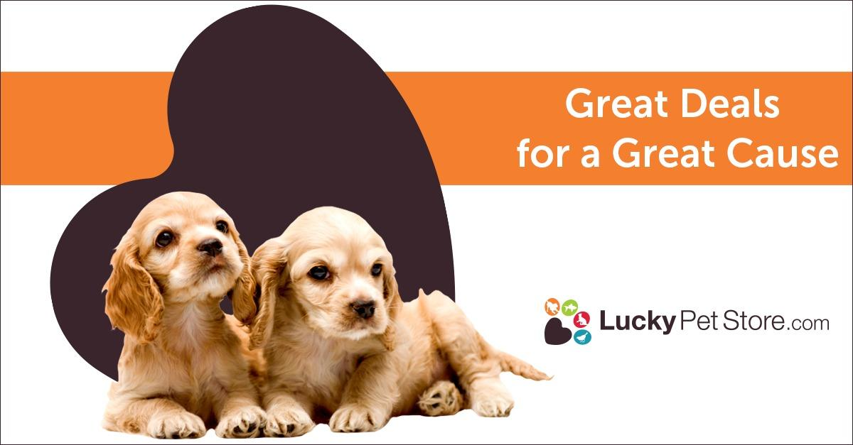 Want Dog Grooming Products? Let us Help