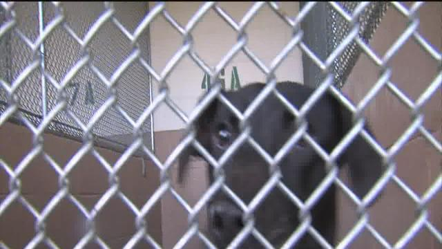 Overpopulated dog shelter asking community to give dogs home