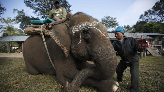 A mahout decorates his elephant before the Elephant Festival at Sauraha in Chitwan
