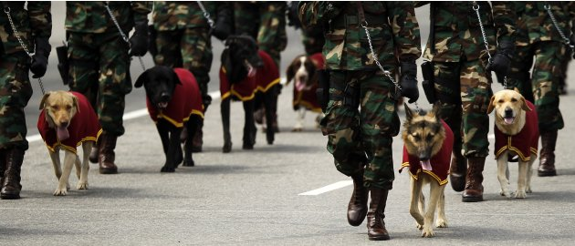 Sri Lankan soldiers march beside sniffer dogs during a War Victory Parade in Colombo