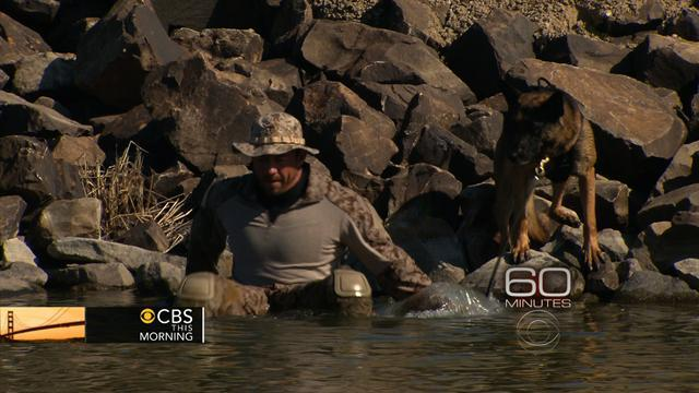 """""""60 Minutes"""" gets rare look at America's Special Ops dogs"""