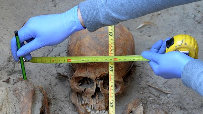 In this photo taken Tuesday, Aug. 7, 2012, an archeologist measures a skull during works at the Powazki cemetery in Warsaw, Poland.  More than a hundred skeletons of Poles murdered by the communist regime after World War II have been excavated from a secret mass grave on the edge of Warsaw's Powazki Military Cemetery during recent digging works. Historians hope to identify among them the remains of Witold Pilecki who volunteered to be an Auschwitz inmate to secretly gather evidence of atrocities there. (AP Photo/Alik Keplicz)