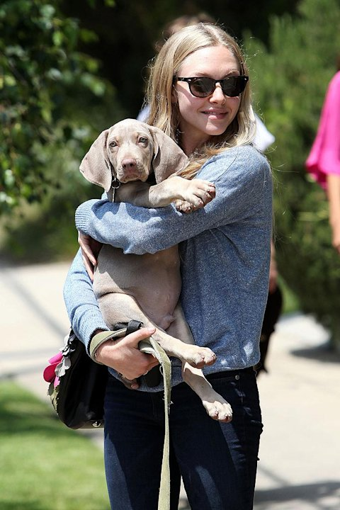 Seyfried Amanda Walks Dog