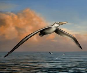 World's Largest Flying Bird Was Like Nothing Alive Today