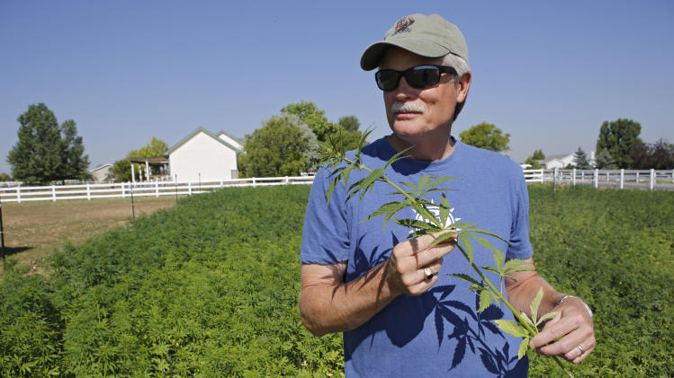 This July 3, 2014 photo shows Jim Denny of Brighton, Colo., inspecting the growth of a field of hemp on his property. Denny learned the hard way that he needed neighbors' permission before growing hemp. He learned about marijuana's non-intoxicating cousin at an event earlier this spring and decided to try the crop on a 75-by-100-foot plot in his yard. But Denny's hemp plot ran afoul of his homeowners' association, which ruled the hemp experiment unacceptable. (AP Photo/Ed Andrieski)