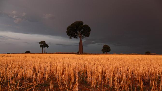 File photo of freshly cut wheat under approaching storm clouds near Roma