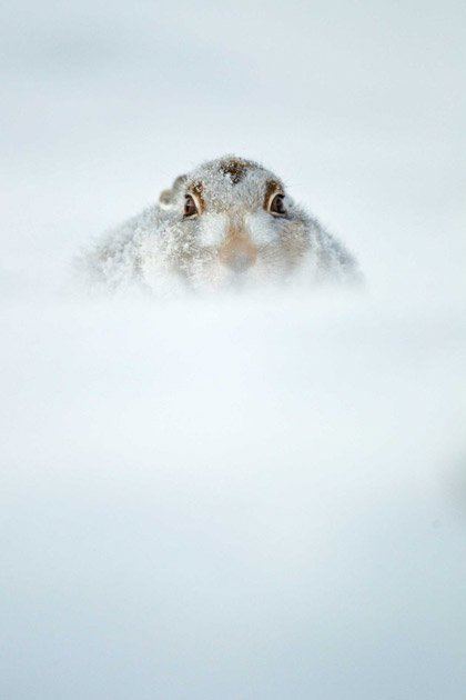 British Wildlife Photography Awards 2012