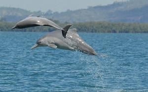 New Dolphin Species Identified Off Australian Coast