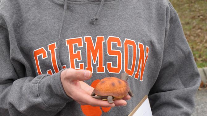 In this Dec. 12, 2012 photo, Clemson University student Nathan Weaver holds a fake turtle he is using in his research to try and save the animals in Clemson, S.C. Weaver is placing the fake turtle in roads near campus and seeing how many drivers intentionally run over it. (AP Photo/Jeffrey Collins)