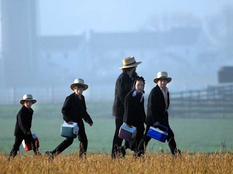 amish family field