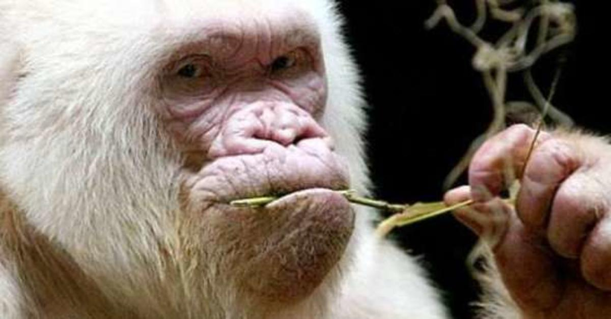 10 Unusual Animals That Actually Exist