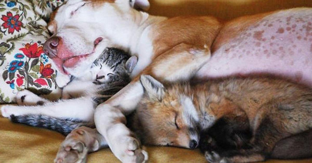 The Most Adorable Animal Friends Sleeping Together