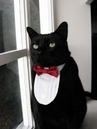 Cat tuxedo by Etsy seller SnoopCattyCatt. Photo courtesy of Etsy.com