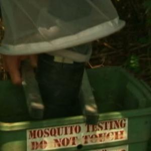 At Least 20 Chikungunya Cases in New Jersey