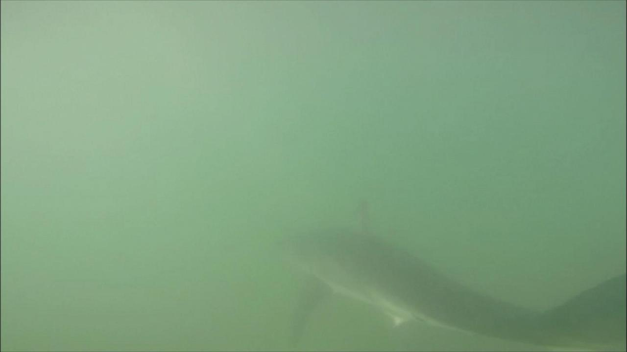 Paddle Boarder's Close Encounter With Shark Caught on Underwater Camera