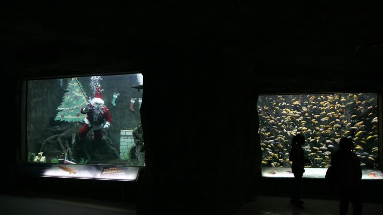 A diver dressed as Santa Claus swims in a fish tank at the Guadalajara Aquarium in Zapopan