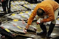 <p>A fishmonger checks large bluefin tuna before the first trading of the new year at Tokyo's Tsukiji fish market on January 5, 2012. Thousands of tonnes of Atlantic bluefin tuna traded through Panama over a decade were never reported to the global body tasked with protecting the threatened fish, green group WWF claimed Wednesday.</p>