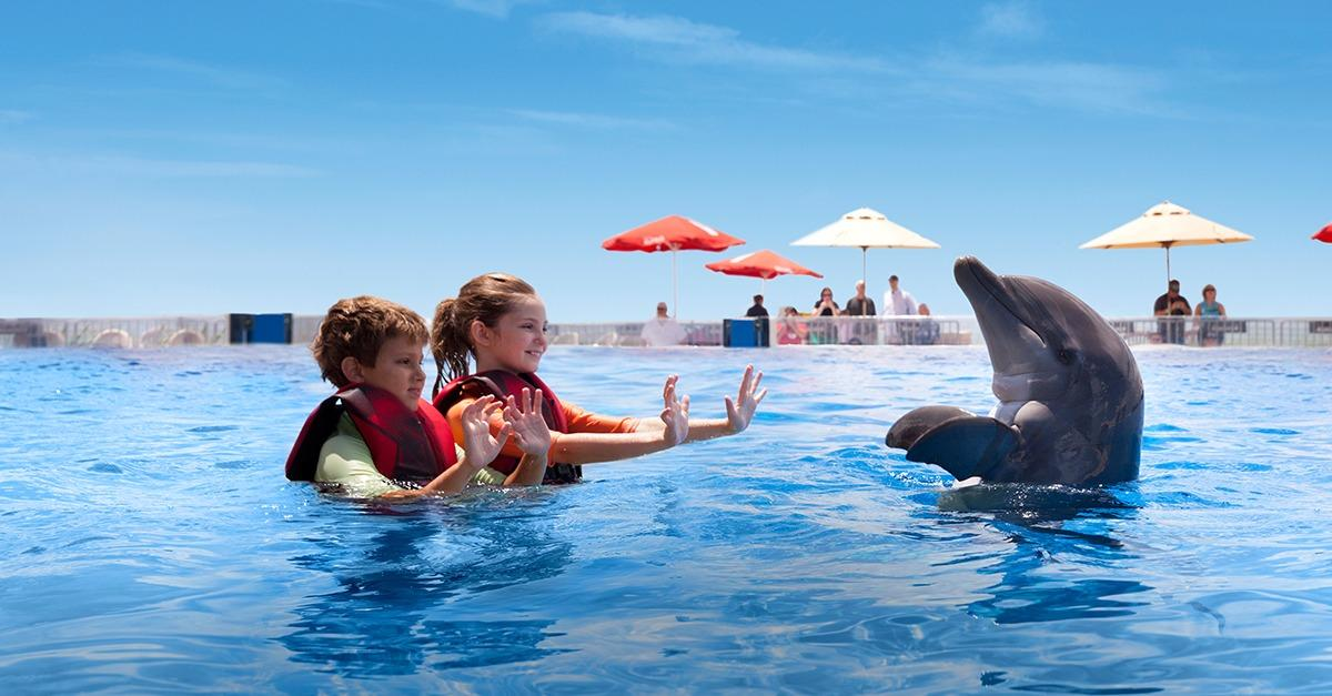 20 ways to meet a dolphin.