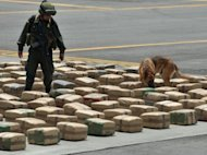 "A Colombian policeman from an anti-drug unit walks with a sniffer dog amidst marijuana packages on display for the press in August 2012, in Tulua, Colombia. Four tons of marijuana ""red dot"" type allegedly belonging to the Sixth Front of the Revolutionary Armed Forces of Colombia (FARC) were seized while being transported"