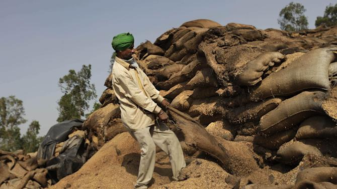 "In this Wednesday, May 9, 2012 photo, a laborer pulls at a sack of rotting wheat grain trying to salvage any that was still edible, at an open storage area in Khamanon village, some 215 kilometers (133 miles) from Amritsar, India. Millions of tons of wheat were rotting in the open after India ran out of warehouse space to store its growing grain stockpiles. Food Minister K.V. Thomas said Thursday the government was taking ""all necessary steps"" to increase its storage capacities and that the government was looking at private partnerships to attract investment in building warehouses and new storage spaces would be available by the end of the year. (AP Photo/Altaf Qadri)"