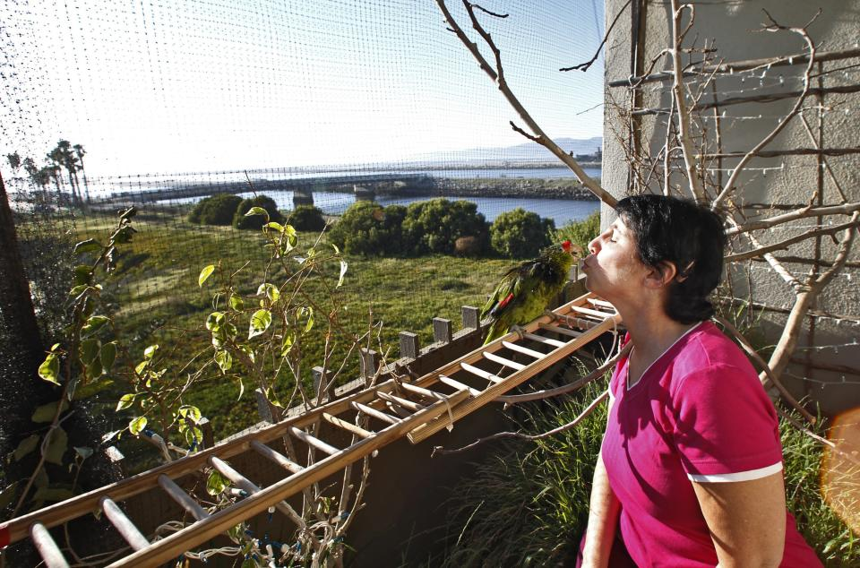 "In this photo taken on Tuesday, Feb. 8, 2012, Mira Tweti, Executive Director, National Parrot Care & Cage Xchange, kisses her rescue parrot named ""Liberty,"" in her converted aviary on her apartment balcony in the Marina Del Rey area of Los Angeles. (AP Photo/Damian Dovarganes)"