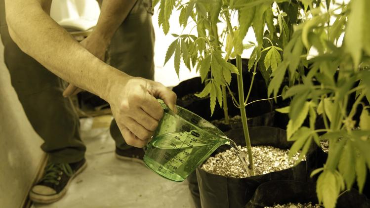 Marijuana activist and home grower Juan Vaz waters his indoor marijuana cultivation in Montevideo