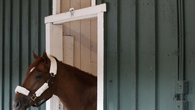 Kentucky Derby winner I'll Have Another stands in a stable at Pimlico Race Course in Baltimore, Monday, May 7, 2012. I'll Have Another is expected to compete in Baltimore's Preakness Stakes horse race on May 19. (AP Photo/Patrick Semansky)