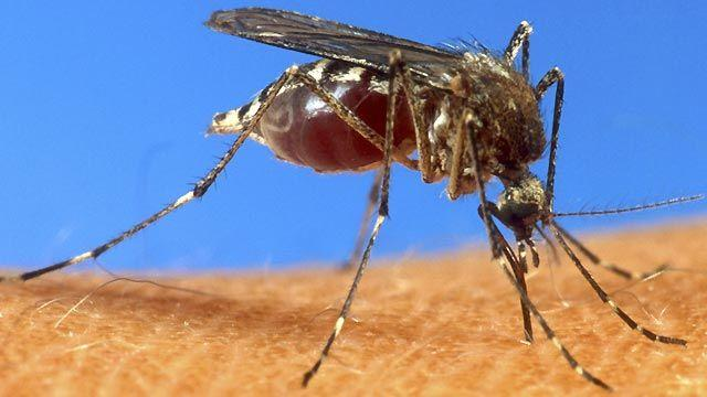 CDC: 2012 on pace to be worst year for West Nile virus