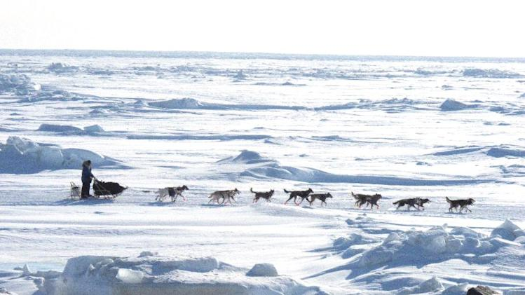 Musher Michelle Phillips of Tagish, Yukon Territory, Canada, makes the final push on the Bering Sea ice for the finish line a few miles outside Nome, Alaska, on Wednesday, March 13, 2013. She finished in 24th place. (AP Photo/Mark Thiessen)