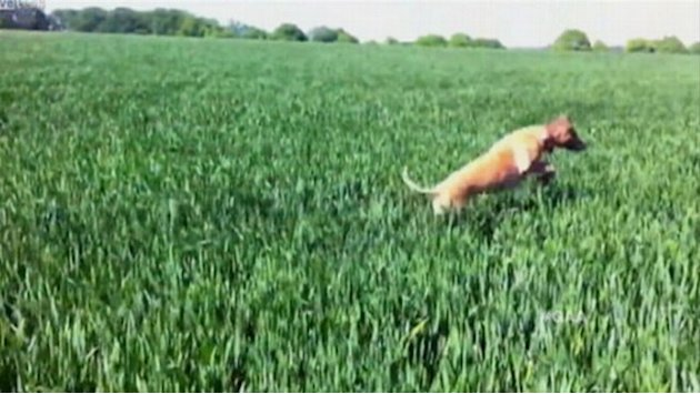 'GAA' Afternoon Play: Dog Bounces Through Field