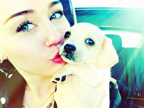 "Miley Cyrus Adopts New Puppy Bean: ""She Brought So Much Sunshine!"""