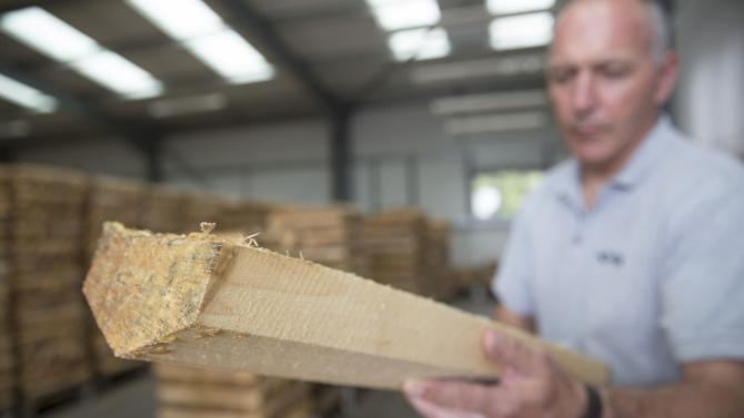 A worker checks the final grade of cricket bat blades at J S Wright & Sons cricket willow suppliers in Chelmsford