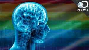 What Does The Transgender Brain Look Like? - DNews