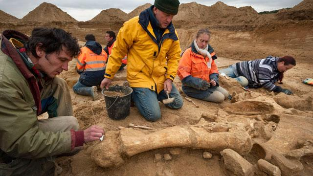 Rare Mammoth Found in Great Shape