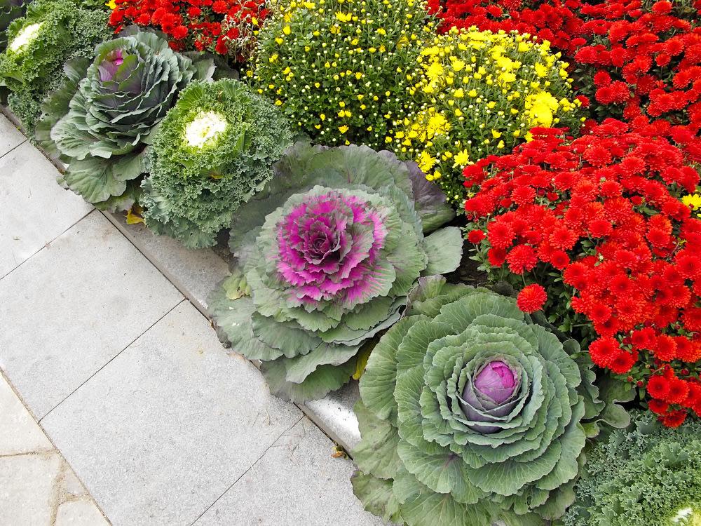 Freshen up a gorgeous fall garden | Y! Homes | Design Center ...