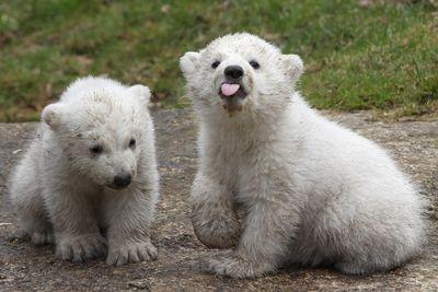 7 adorable animals that are also murderous monsters