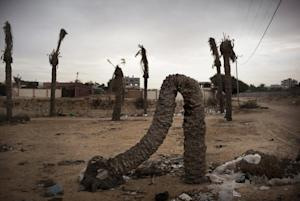 A dead palm tree is seen in a sewage prone area north…